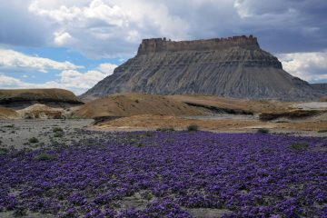 Factory Butte Super Bloom