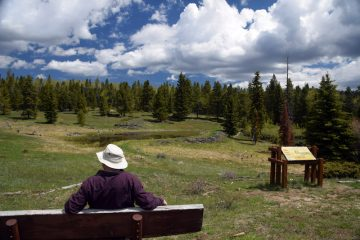 Beaver Pond Interpretive Trail