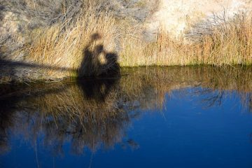 Ash Meadow National Wildlife Refuge